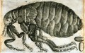 Help! Fleas! Tips on how to get rid of fleas in your house and on your animals