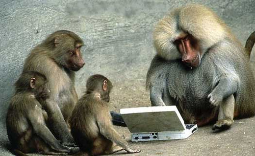 These monkeys were hit hard by Google's Panda update...
