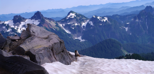 A marmot takes in the view.
