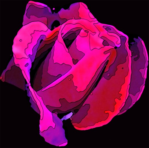 This abstraction was created from a photograph of a Mr. Lincoln rose growing in the author's front garden.