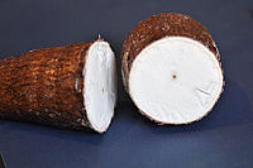 Cross section of the cassava