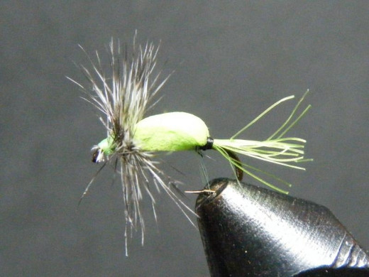 A dry fly with a grizzly hackle.  Note the full, stiff barbs coming from the rachis of the neck hackle feather.