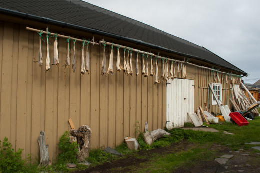 Drying cod, Vardø, Norway