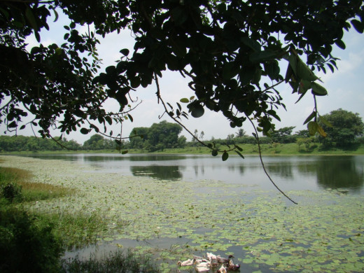 The large pond called Kshir Dighi
