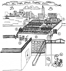 Go to their website to see this downloadable picture and accompanying description of how a green roof works!
