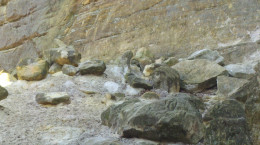Sandstone in St. Louis Canyon