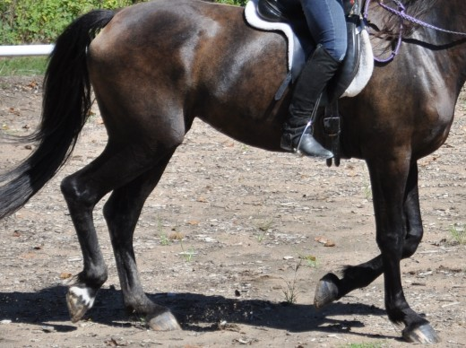 "This horse is not ""tracking"".  Tracking occurs when the hind feet come to the ground at the same spot as the front feet."