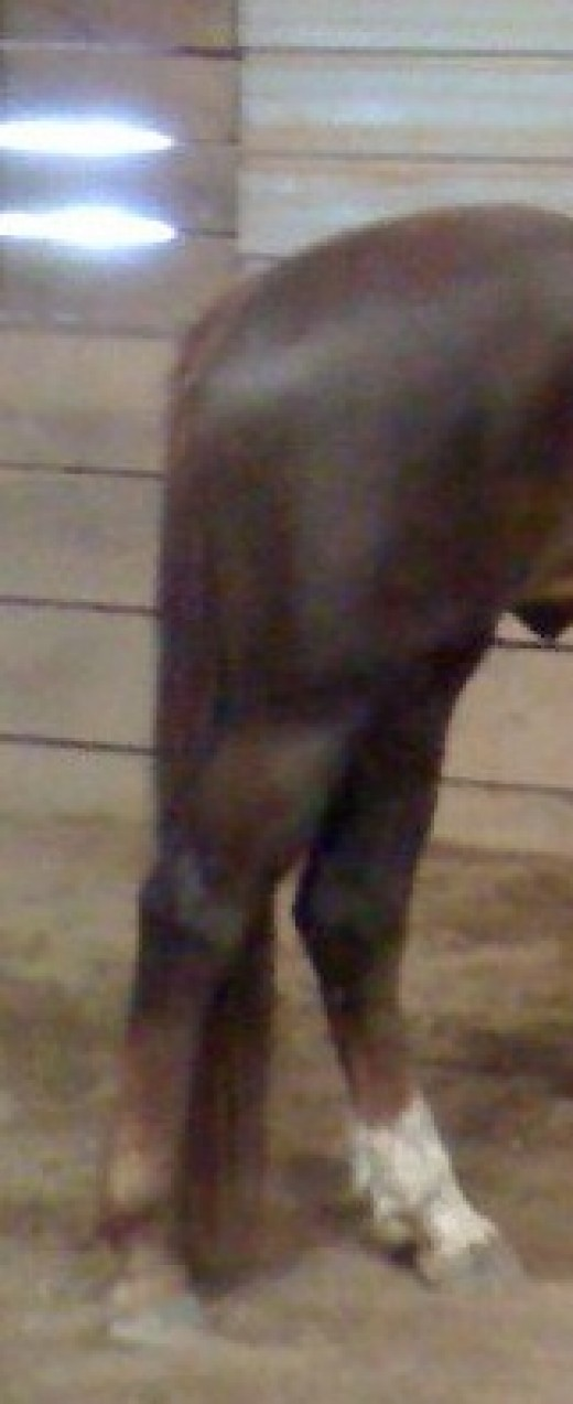 These are Zero's hind legs.  They are very straight, which can predispose him to UPF.