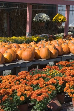 Decorating Your Porch with Mums this Fall