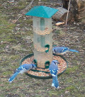 Choosing a Backyard Bird Feeder