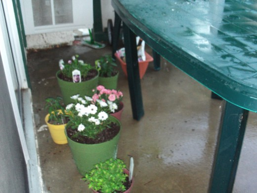 Flowers planted in the container garden.