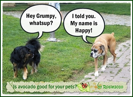 - Is Avocado good for your pets?, by Rosie2010 -