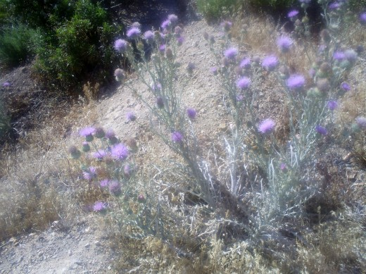 More flowers in the mountains.