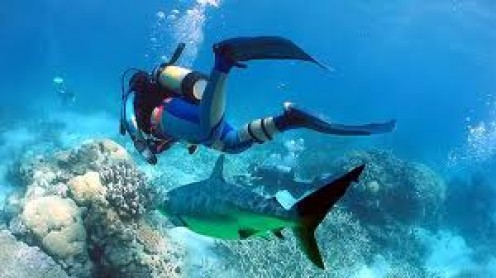 Scuba Diving in the Pacific Ocean is one way to see the ocean up close and personal. Always have all emergency equipment ready just in case it's needed.