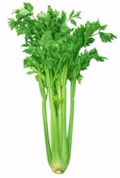 Health Benefits Of Celery, Celery Seeds, Celery  Juice And Celery Oil