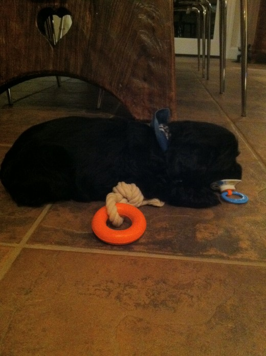Cooley with two toys:  the orange ring which she is supposed to be playing with and the pacifier in her mouth which actually belonged to my 3-year-old.