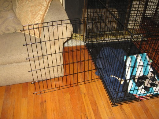 Wire Dog Crates often include removable partitions.