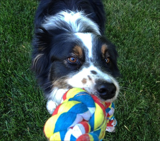 A playful companion