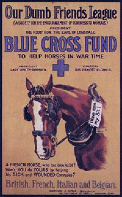 Blue Cross poster from World War I.  Blue Cross has been caring for sick and injured horses since 1897, including during WWI, and opened the first animal hospital in the world in 1906.