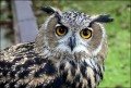 Why are owls so popular right now?