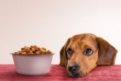 6 Foods You Must Avoid Feeding to Dogs