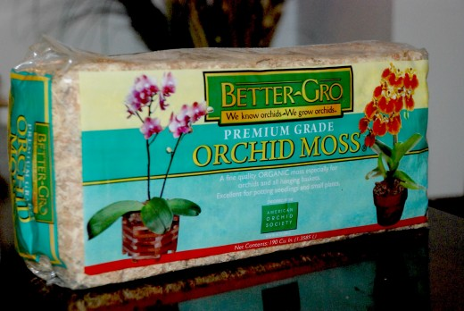 The Orchid Moss,  a sphagnum moss that I can use like peat moss when moving the plant into a 6 inch pot.