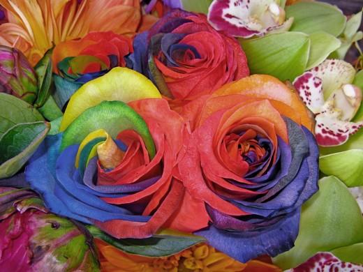 Rainbow Roses the best flower gift