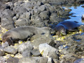 Save the Monk Seal - You Can Help