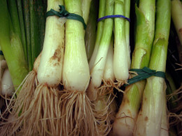 Don't buy the ones with the scallions cut off, that is the root and without the root, you can't re-grow your own.