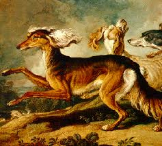 One of the oldest dog breeds - the saluki - is still used for hunting rabbits and in the US they race with far longer endurance than greyhounds.