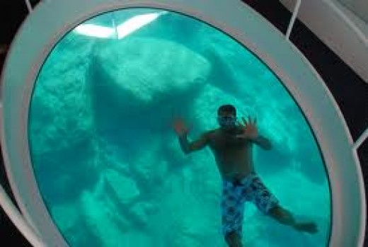 Seeing is believing on a Glass Bottom Boat.  There are so many species of fish to see and learn about.