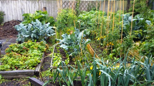 Our vege garden will get a lot of use