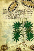 A Brief History of the Secret Voynich Manuscript
