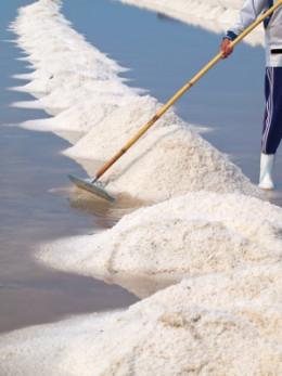 Harvesting of salt after solar evaporation