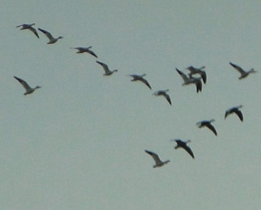 Birds heading South