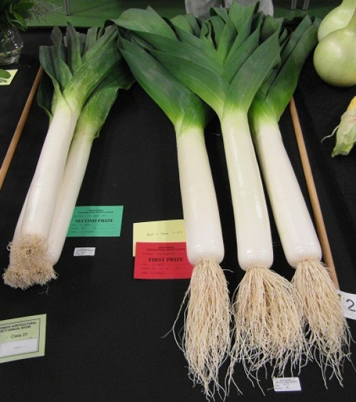 Giant leeks at a local show
