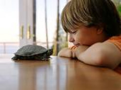 Boy and his pet turtle.