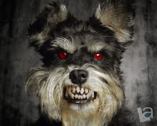 Evil Dog!