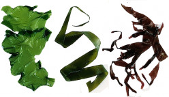 Health Benefits Seaweed - Nutrition Facts and Uses