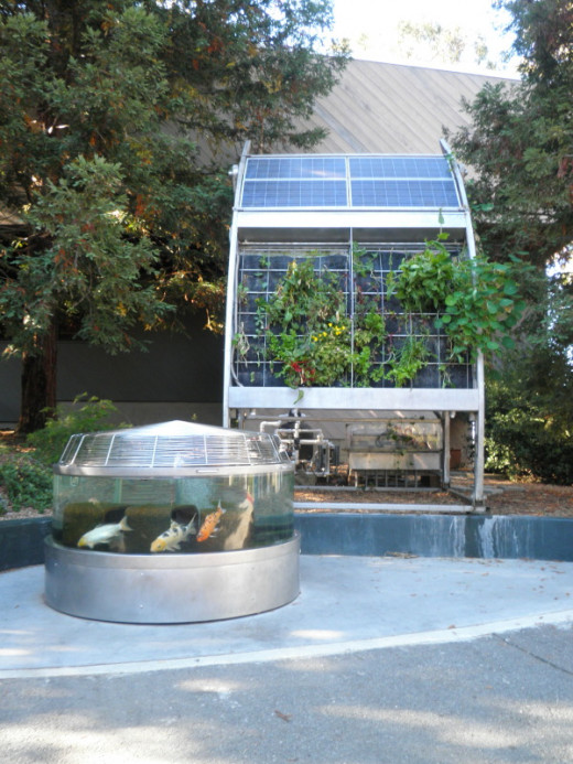 Inka Biospheric Systems aquaponics/hydroponics and solar installation at the Coyote Point CuriOdyssey Museum.