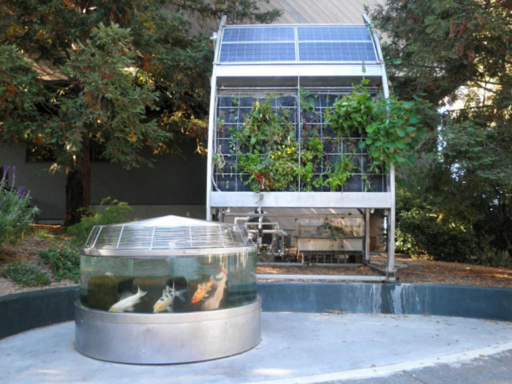 Sustainable ecosystems aquaponics and hydroponics growing for Hydroponics aquaponics