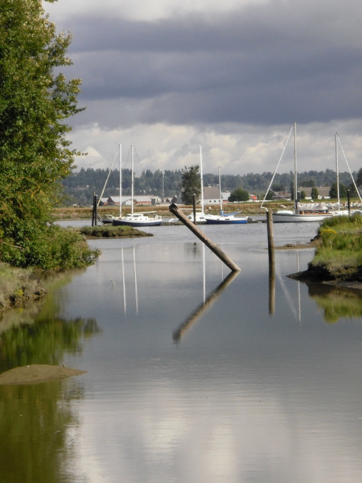 At the Fraser River Estuary, the fresh river water flows into the salty water of Boundary Bay.