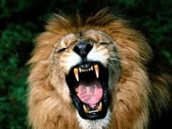 I Sent A Lion To Eat Him - A Brief Study Of Darius And Daniel The Prophet