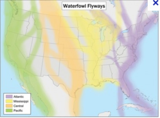 The Pacific Flyway is a corridor for migrating birds on the West Coast of North America.