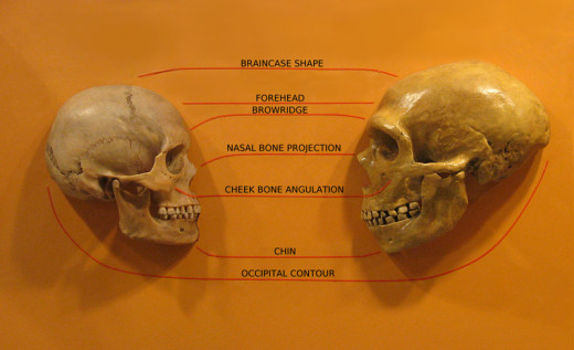 The differences between Humans and Neanderthals are obvious. The similarities are ,too, and  may extend to their abilities to communicate using words.