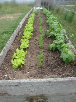 Raised beds are a good method of frontyard/backyard food gardening, especially if you don't have a lot of space.