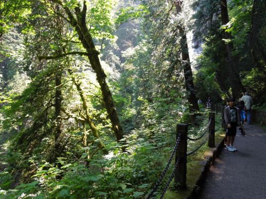 Multnomah Falls Walking Trail