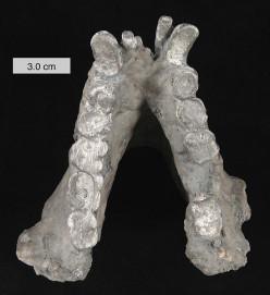 Gigantopithecus Blacki: Bigfoot-Giganto Theory