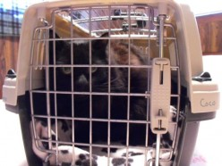 Tips on How to Bring Your Cat with  You on a Car Trip