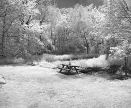 infrared in my backyard